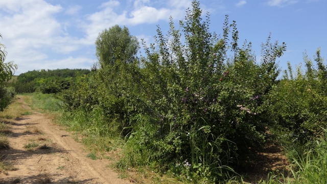 Očuvanje vodeće voćne vrste u srpskoj poljoprivredi