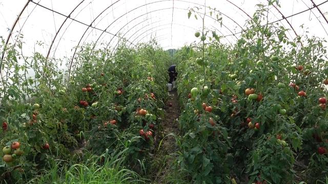Analiza ekonomsko-finansijskih aspekata proizvodnje povrća
