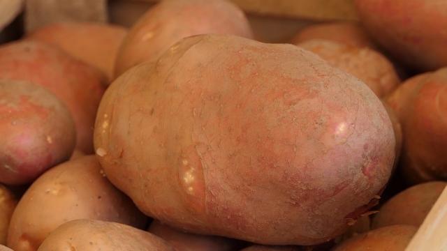 Prinos krompira verovatno najveći u poslednjih 20 do 30 godina