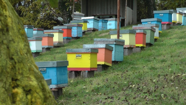 Pčelari sumiraju rezultate godine na izmaku