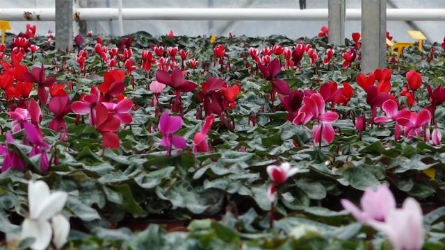 Prihod od prodaje cveća odlazi u humanitarne svrhe