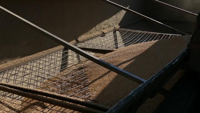 Cene žitarica tokom pandemije vrtoglavo rasle