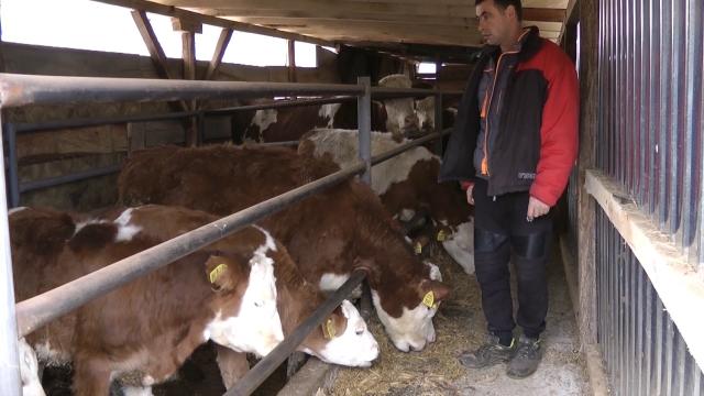Višestruka korist od  zatvorenog sistema mlekovoda za mužu