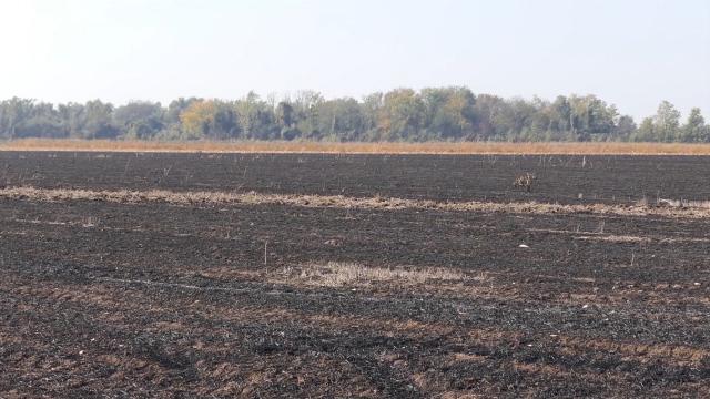 Potrebne hiljade godina da se formira gornji sloj zemljišta