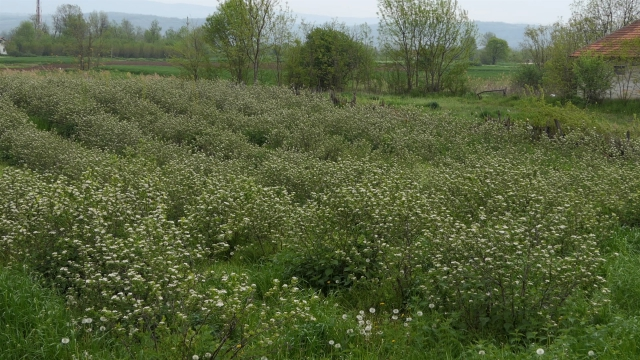 500 sadnica na pola hektara površine