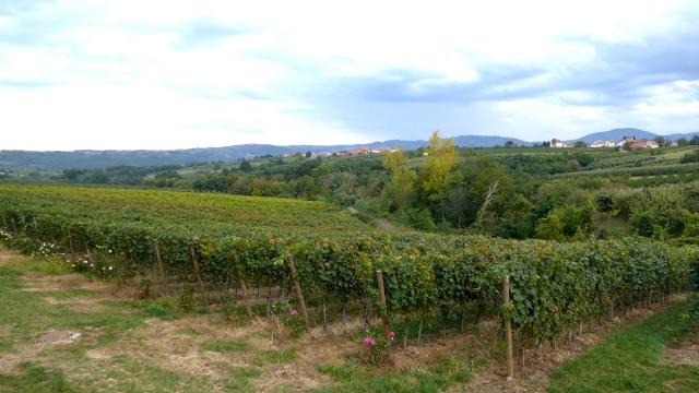Za jun najavljena dva važna susreta balkanskih vinara