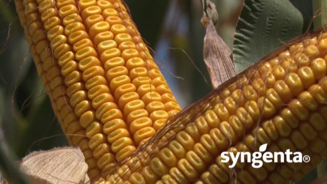 Kada kažem suncokret i kukuruz, mislim Syngenta