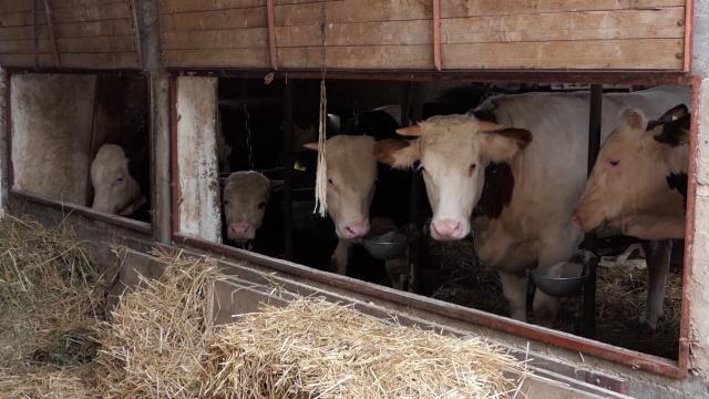 Korona kriza i dalje pogađa proizvođače mleka