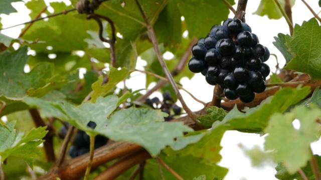 Strateški razvoj vinarskog i vinogradarskog sektora