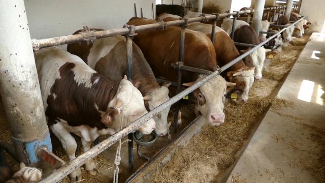 Posao olakšan,  uz  veću kontrolu u pogledu normiranja hrane