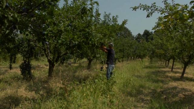 Priprema voćnjaka za novu vegetaciju