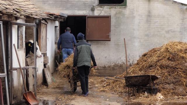 Pšenica u dobroj kondiciji ušla u zimski period