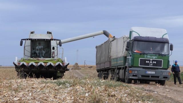 Velike količine  kukuruza kupuje i Kina