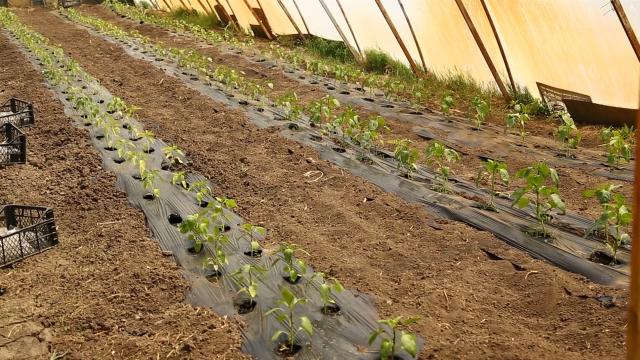 Sredstva za unapređenje organske proizvodnje u Vojvodini