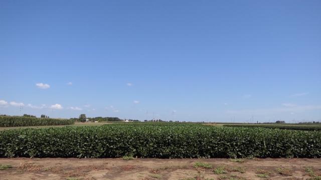 Pripreme za izvoz kukuruza na najveće svetsko tržište