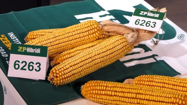 Institut za kukuruz