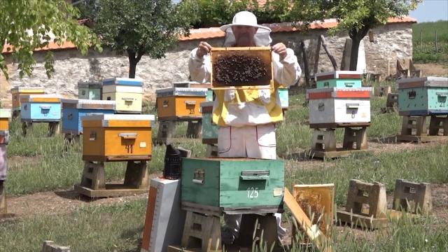Rast potražnje meda otvara mogućnosti za ozbiljniji razvoj pčelarstva