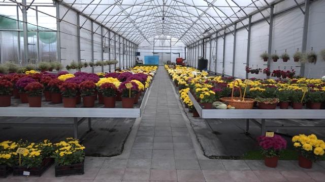 Srbija beleži konstantan rast izvoza cveća