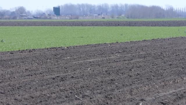Pšenica otporna na sušu i toplotne udare