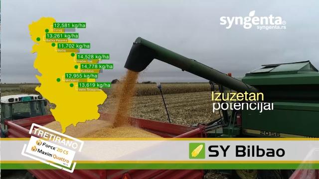Sindžentini hibridi kukuruza za pouzdanu proizvodnju