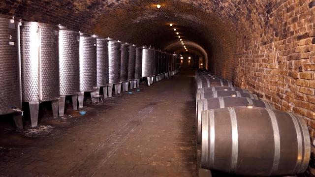 Od 40 hektara vinove loze  proizvedu 12 različitih vrsti vina