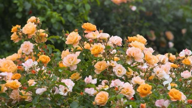U godini kovida, u Lipolistu uvećali prodaju cveća i zelenila