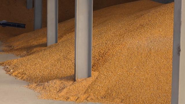 Počelo trgovanje kukuruzom i suncokretom novog roda