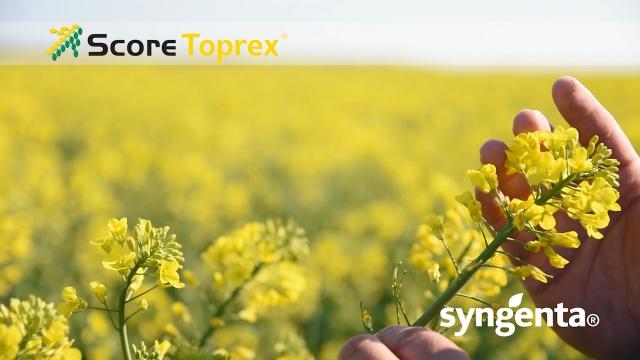 Score Toprex - regulator rasta i fungicig
