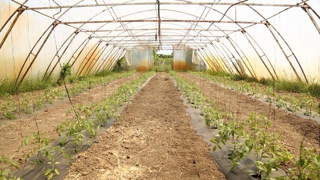 Uvećani  podsticaji u organskoj biljnoj proizvodnji