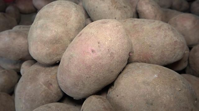 Srbija štiti krompir sezonskom carinom