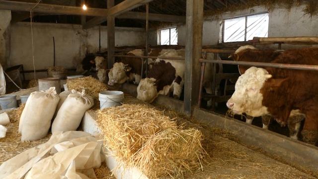 Čak 70% budžeta za poljoprivredu odlazi na stočarstvo