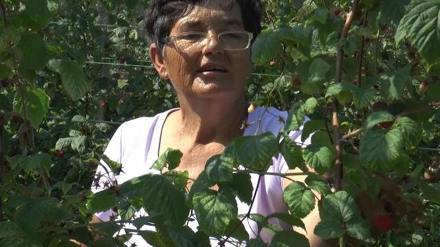 Poljoprivredne kredite lakše dobijaju žene
