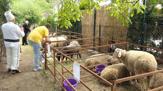"""Savetovanje o ovčarstvu pod sloganom """"juče, danas i sutra"""""""