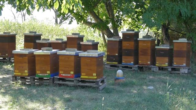 Uz lokaciju pčelinjaka i informacije o položaju atarskih puteva, šuma, vode...