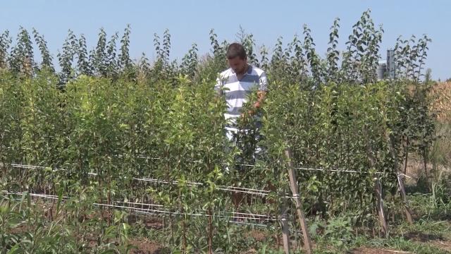 Poznati rezultati konkursa za mlade poljoprivrednike