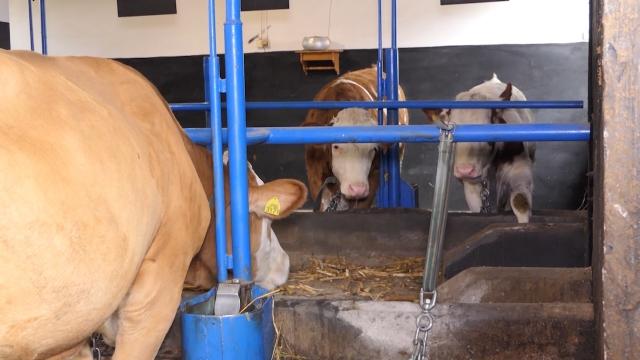 Najveće interesovanje za opremanje stočarskih farmi