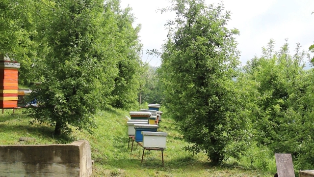 Promena klime - glavni problem pčelarstva