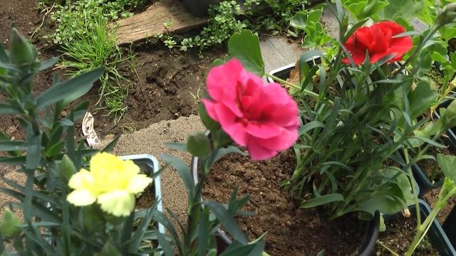 Cveće, za lepše i mirisnije vrtove i balkone