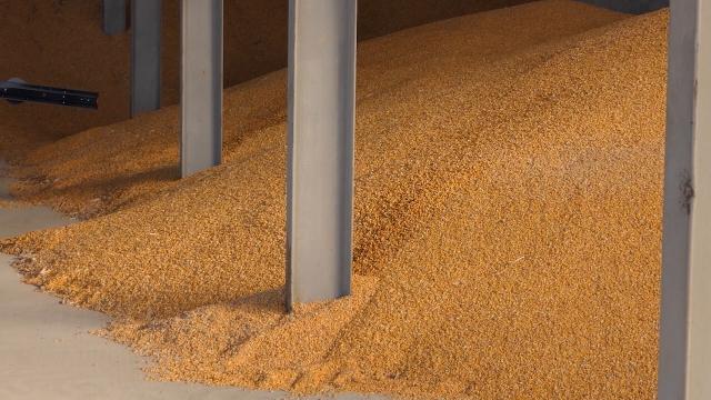 Pad cena kukuruza, pšenice i soje