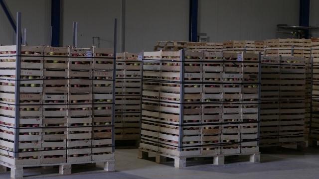 Velika konkurencija na tržištu jabuka