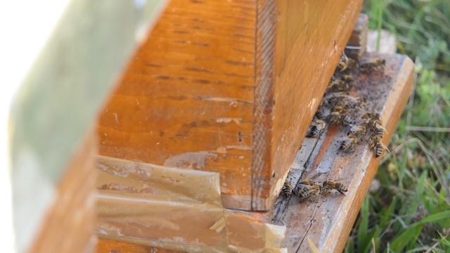 Posle tri loše, pčelari se nadaju boljoj sezoni