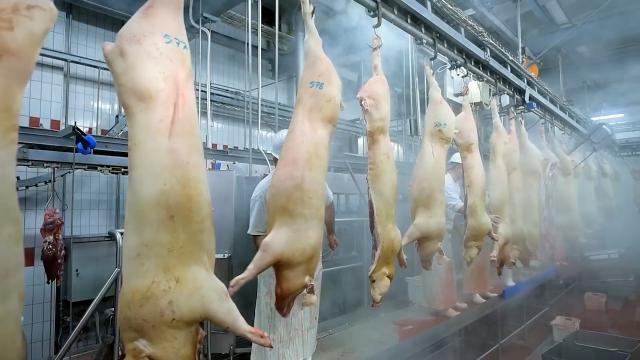 Pozitivne promene na tržištu svinja