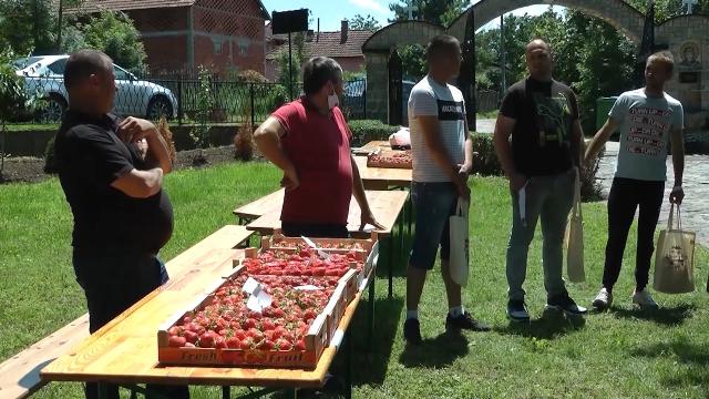 U Karađorđevcu pod jagodom oko 50 hektara