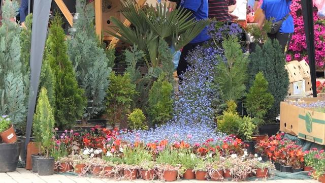 Trg u centru  Žitišta u znaku cveća
