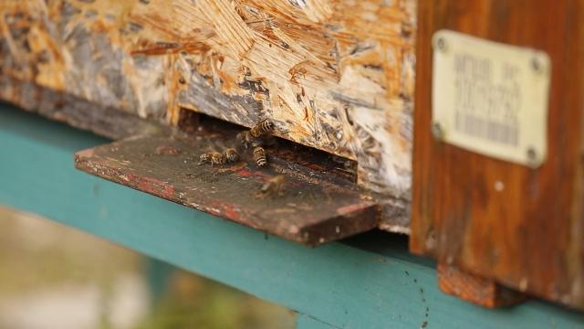 Kikindskim pčelarima više od milion dinara