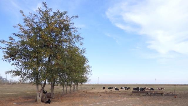 Dve krave stradale od udara groma