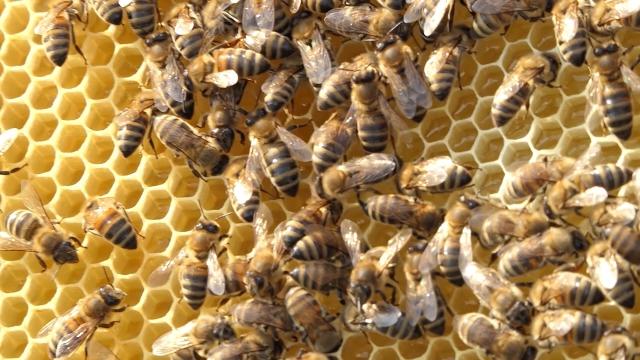 Mere za unapređenje pčelarstva u Kikindi