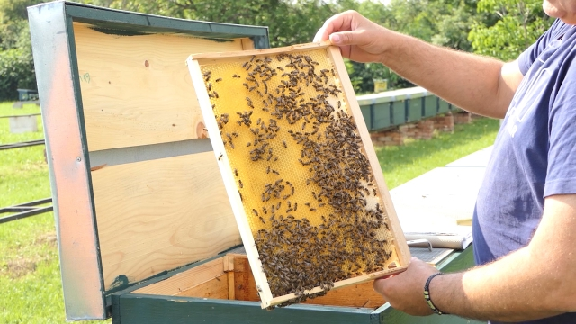 Sredstva za unapređenje pčelarstva u Vojvodini