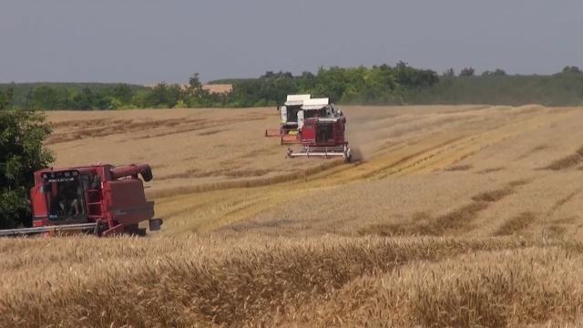 Rano  je za ozbiljnije procene ovogodišnjeg roda pšenice