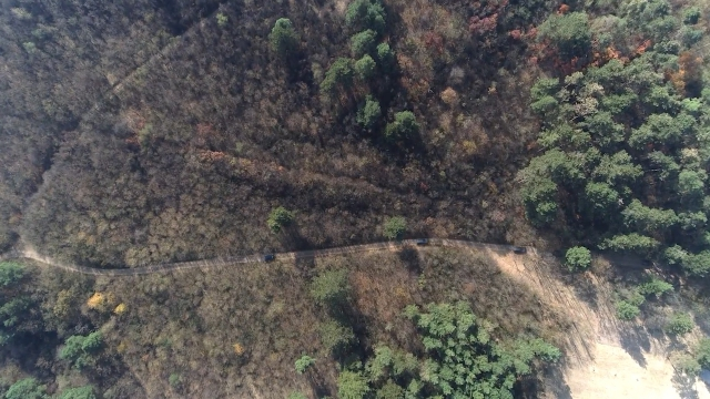 Vojvodina i dalje siromašna šumama